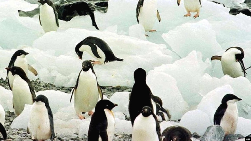 In Turkey Penguins Become Symbol Of How Media Missed The Story
