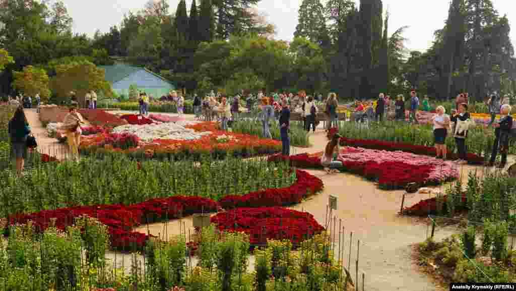 «Бал хризантем» відкрився на головному виставковому майданчику Нікітського ботанічного саду. Цього року виставка отримала оригінальну назву – «Осінній блюз»