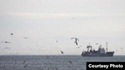 Родственники захваченных моряков не в состоянии выплатить требуемый пиратами выкуп