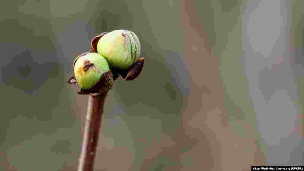 Гілки невеликих чагарників уже в бруньках