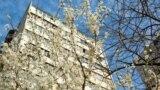 Возле 13-этажного многоквартирного дома цветет слива. Ее высадили местные жители для украшения улицы