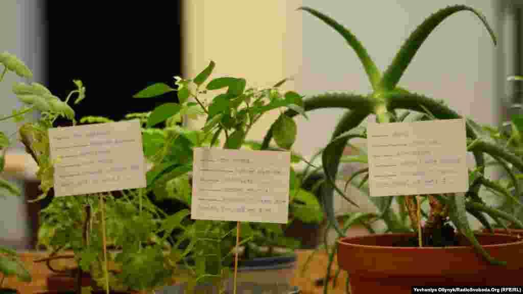 Калле Хамм, Дзаміль Камангер, «Сад незадокументованих». Художники представили 14 рослин, які таємно перевезли з-за кордону в Фінляндію. Згідно з законодавством ЄС, на його територію дозволено шамозити не більше 20 одиниць зрізаних квітів, а решта мають мати відповідну документацію до ввезення. Автори, один із яких походить з Ірану, використовують рослини, як метафору біженців.