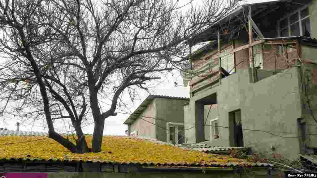 Дерево, проросшее сквозь крышу, окрасило ее в желтый цвет