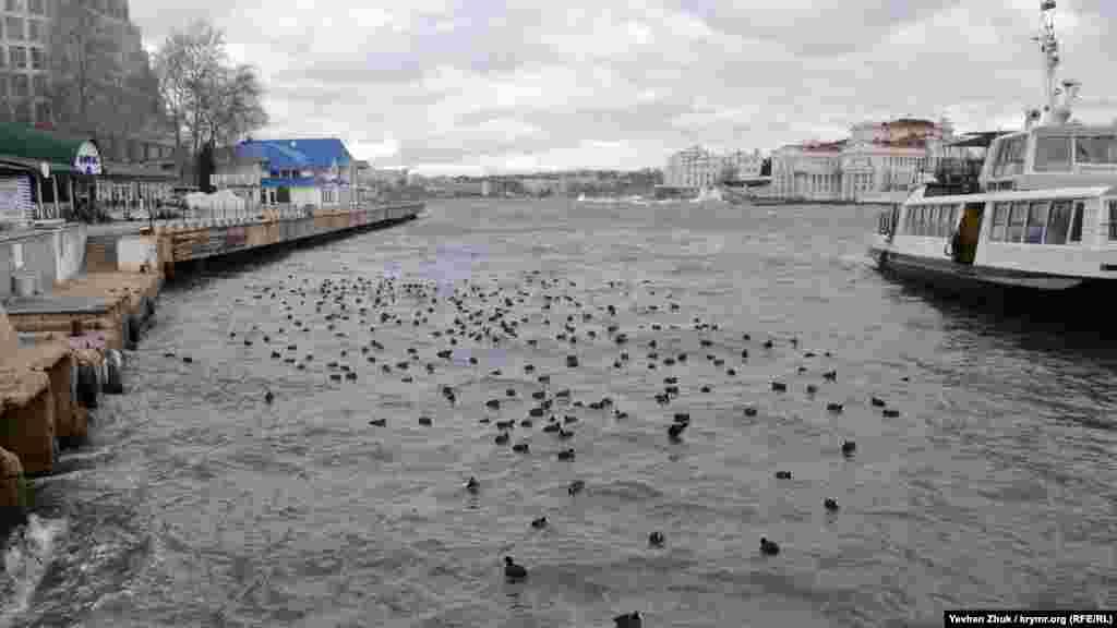 Утки-нырки укрылись от волн и ветра у пассажирского причала в Артиллерийской бухте