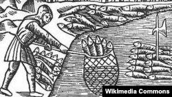Вылов сельди в средневековой Скании