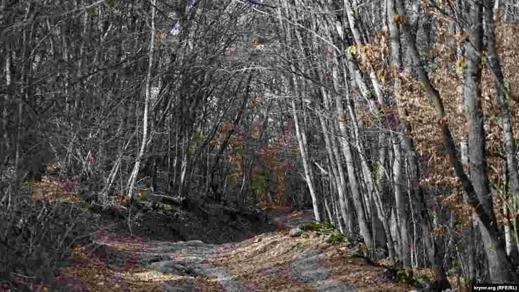 Извилистая проселочная дорога напоминает живой тоннель