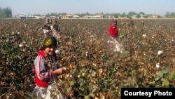 Activists have long have accused the Uzbek authorities of forcing schoolchildren and university students to pick cotton, one of the country's biggest exports.