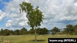 Весенний лес под Севастополем: трудяга-шмель и добродушные собаки (фотогалерея)