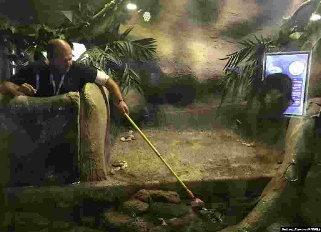 Аквариумист Вячеслав Щепакин кормит свежим мясом морских обитателей в строго определенные часы. Частота кормежки зависит от потребности каждого питомца. Для них здесь специально разводят пресноводных рыб. Астана, июнь 2018 года.