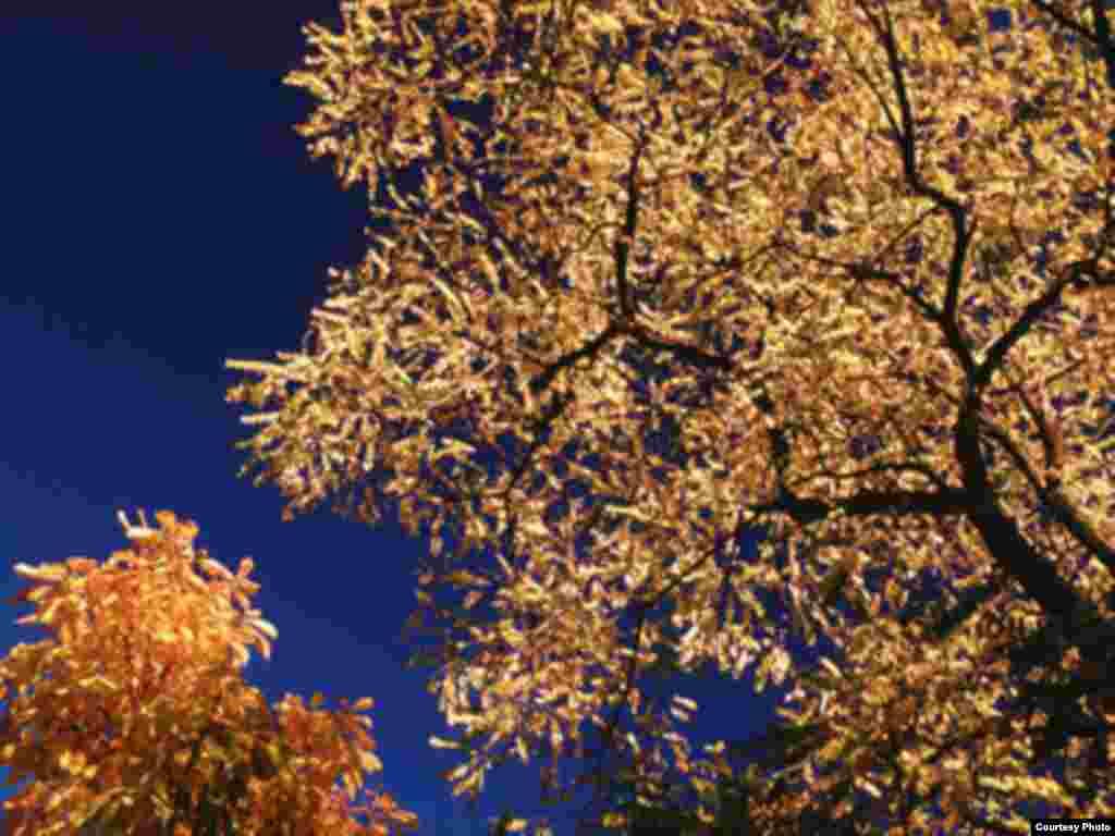 پادشاه فصلها پاییز - روسیه در انتظار سپیدی زمستان