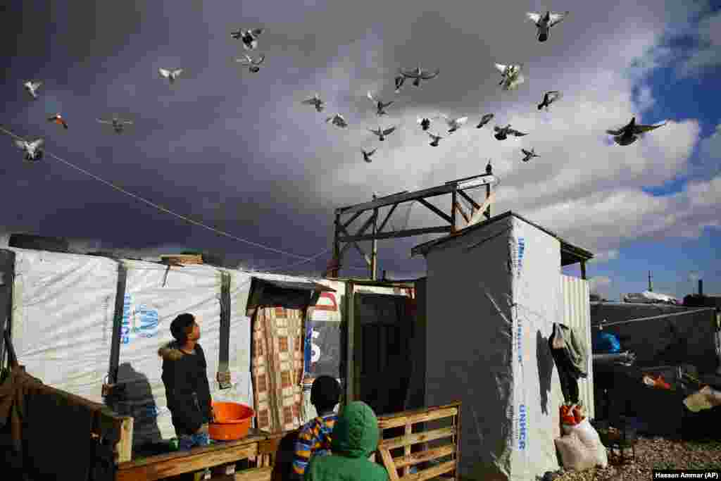 A boy watches his pigeons fly at an informal refugee camp in Zahle city in the eastern Bekaa Valley, Lebanon. (AP/Hassan Ammar)