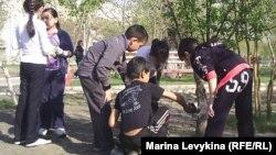 Школьники белят деревья на кануне майских праздников. Семей, 28 апреля 2012 года.
