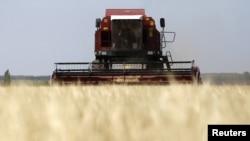 Урожай зерновых в России пострадал из-за рекордной за последнее 10-летие засухи
