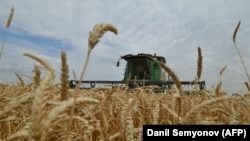 RUSSIA -- Farmers use a combine harvester as they harvest a wheat field in the southern Russian region of Stavropol, July 9, 2014