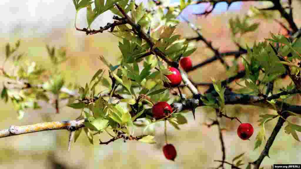Среди растений тут можно найти различные плодоносящие деревья и кустарники. Это, к примеру, шиповник