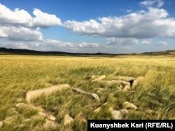 Остатки древнего захоронения в Абайском районе Восточно-Казахстанской области. 17 августа 2016 года.