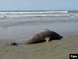 Туша мертвого дельфина на берегу моря.