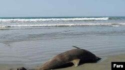 کارشناسان نسبت به بروز فاجعه زیستمحیطی در خلیج فارس هشدار می دهند.