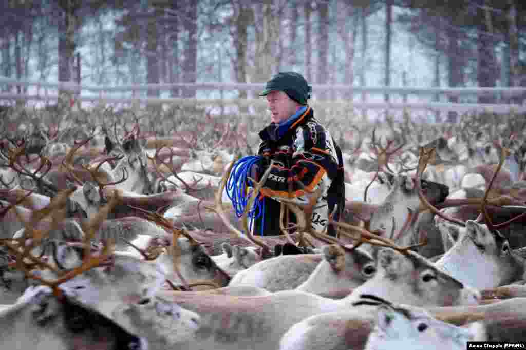 "The Sami are an indigenous people who live in parts of Scandinavia and the Arctic. Their lives have traditionally revolved around reindeer herding. Kjell says of the Sami way of life: ""We are the last free people on earth. If I want to go into the mountains, I go. If I want to stay at home, I stay at home."""