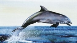 Новый древнейший Адам, шароголовые дельфины и возвращенное зрение