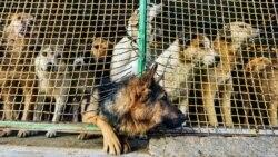 حیوانات شهری؛ از مراقبت تا تجارت