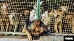 یکی از پناهگاههای حیوانات در اطراف تهران