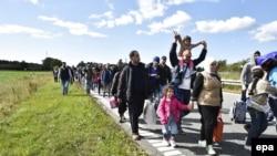 Большая группа мигрантов идет по дороге на севере Дании