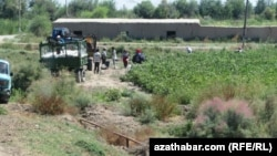 Хлопковое поле в Туркменистане (архивное фото)