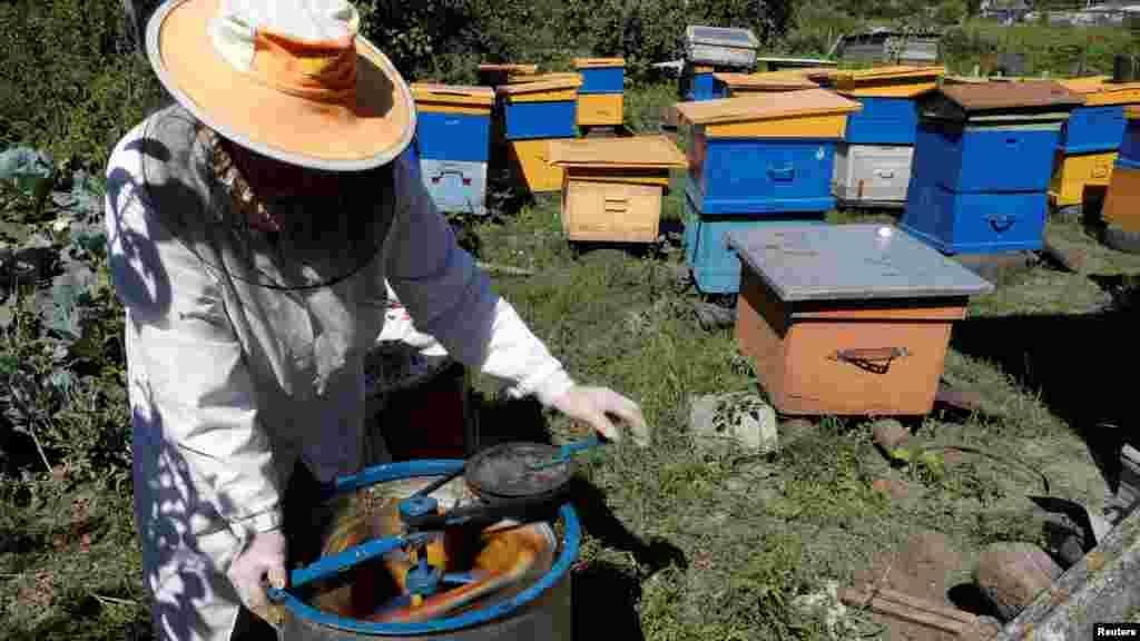 С помощью медогонки Анна Лобынцева извлекает мед. Затем фильтрация, после чего мед готов к употреблению