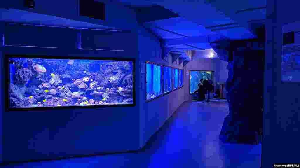 Приглушенное освещение позволяет лучше рассмотреть морских обитателей в аквариумах, которые ярко подсвечены