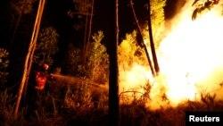 Հրշեջները փորձում են մարել անտառում բռնկված հրդեհը երկրի կենտրոնական շրջանում, Պորտուգալիա, 18-ը հունիսի, 2017թ․