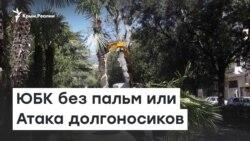 ЮБК без пальм или Атака долгоносиков | Радио Крым.Реалии