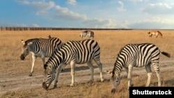 У біосферному заповіднику «Асканія-Нова» можна побачити у природному середовищі незвичних для України тварин