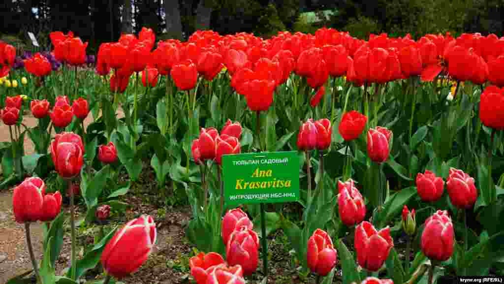 Две гибридные формы селекции Никитского ботанического сада, как говорят его работники, экспонируются впервые.