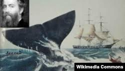 """""""Moby Dick"""" kitabına illüstrasiya"""
