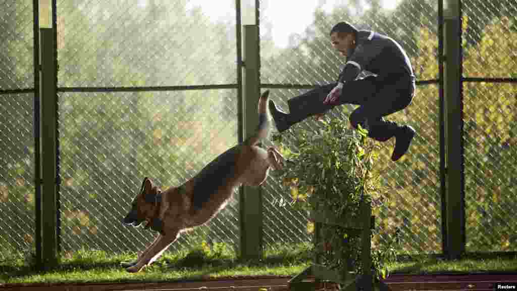 A Belarusian Interior Ministry officer jumps over an obstacle with his guard dog as they take part in a skills competition ahead of the ministry's 60th anniversary near the village of Gorany on October 4. (REUTERS/Vasily Fedosenko)