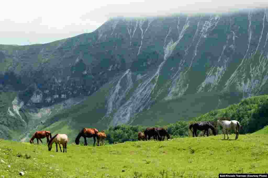 Кони пасутся в горах Чечни