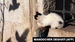 Иллюстрационное фото: кот возле мечети Эйюпа, Стамбул, ноябрь, 1999 года