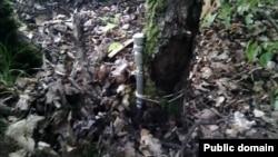 Коклуз авылы янында агачка бәйләп куелган шартлаткыч