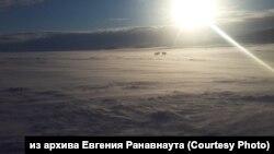 Олени в тундре Чаунского района Чукотского автономного округа