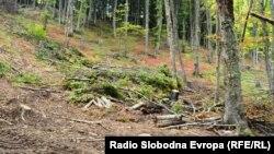 Dëmtimi i pyjeve - foto nga arkivi