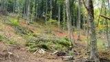 Архива: исечени шуми на Шар Планина.
