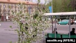 Ташкент в преддверии Навруза. Иллюстративное фото.