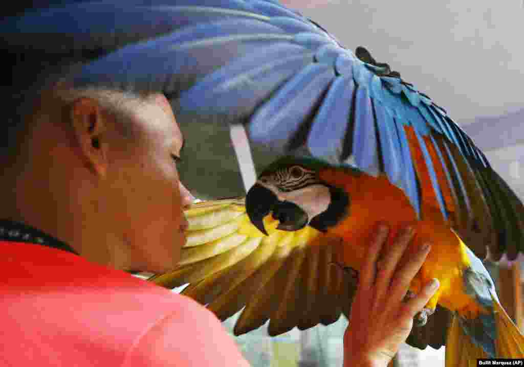 A bird owner entices a macaw to perch on his arm during a campaign to encourage the use of paper horns instead of firecrackers in welcoming the New Year at Malabon Zoo in suburban Malabon city, north of Manila, in the Philippines. Zoo owner Manny Tangco says birds, dogs, and other animals are traumatized by exploding firecrackers as revelers welcome the New Year. (AP/Bullit Marquez)