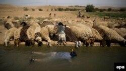 هاآرتص مینویسد که یهودینشینهای اسرائیل مشکل کمبود آب ندارند