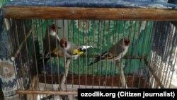 Птицы на базаре «Янгиабад» в Ташкенте.