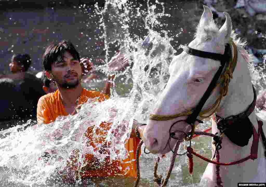 An Indian man cools off his horse during a bath in a canal in Jalandhar. High temperatures of 45 degrees Celsius affected much of central and northern India ahead of the summer monsoon rains. (AFP/Shammi Mehra)