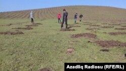 Yeni Zuvand kəndinin sakinləri örüş yeri ərazilərin əllərindən alınaraq, fındıq sahələrinin salınmasından şikayətçidilər