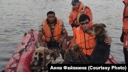 Спасение животных во время наводнения в Приангарье