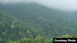 Անտառ Հայաստանում, արխիվ